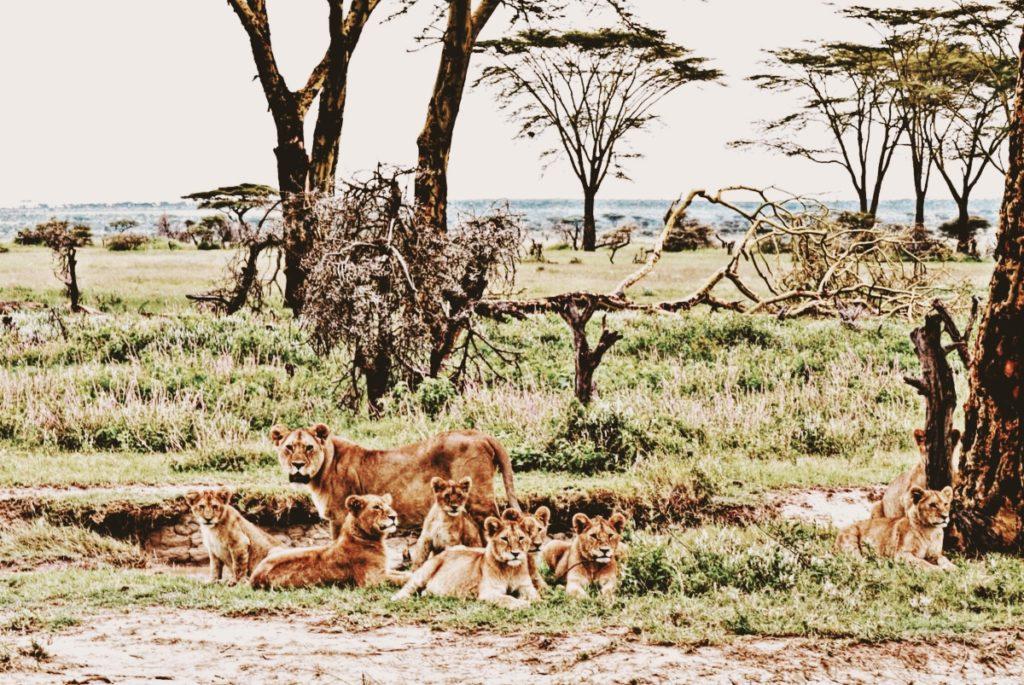 viajar tanzania